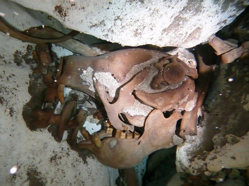 Identificada una especie de perezoso gigante en México de hace más de 10.000 años