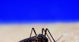 El Hospital San Pedro da de alta al primer caso importado de virus Zika que se ha detectado en verano en La Rioja