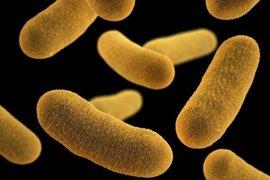 Disminuir las bacterias peligrosas puede ser más eficaz que matarlas