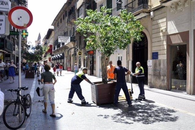 Operarios instalan jardineras en Palma tras los atentados en Cataluña