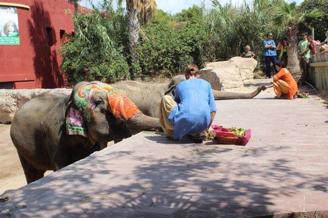 Las cuidadoras han tardado dos días en pintar a las elefantas