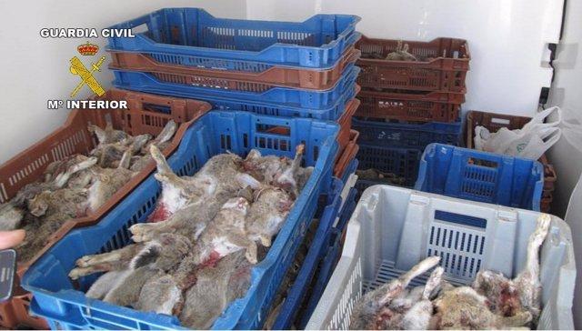 Conejos de caza intervenidos por la Guardia Civil.