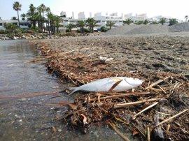 Alertan de que el nuevo cierre de la desembocadura del río Guadiaro provocará muerte de peces