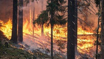 Incendios.- El fuego ha arrasado 75.000 hectáreas en España hasta el 13 de agosto, el peor año del último lustro