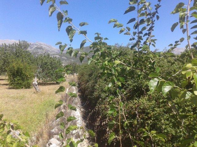 Torrente Selva