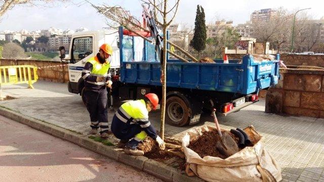Operarios del servicio de parques y jardines de Palma