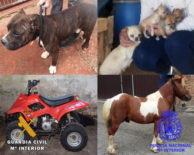 Robo perros, pony y quad