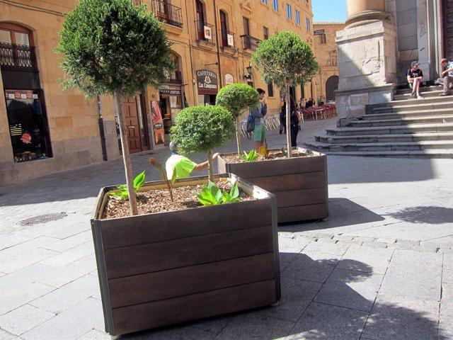 Maceteros de seguridad en Salamanca.