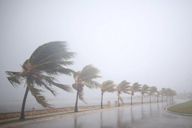 Palmeras azotadas por el huracán 'Irma' a su paso por Cuba