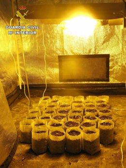 Cultivo indoor de marihuana en Montilla (Córdoba)