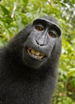 Selfi del mono