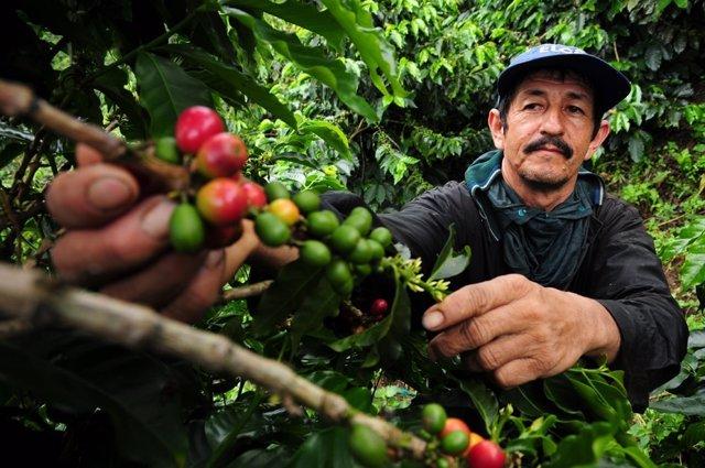 Granjero cafetero en Colombia