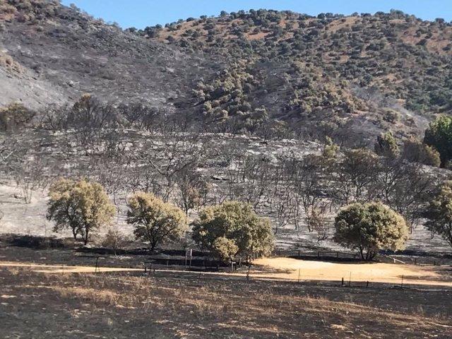 Paraje devastado por el incendio de Cazalla.
