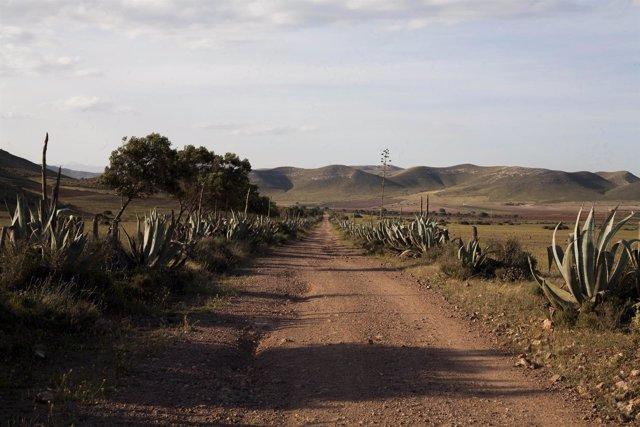 La ruta recorrerá los lugares del Cabo de Gata más destacados para 'Colombine'.