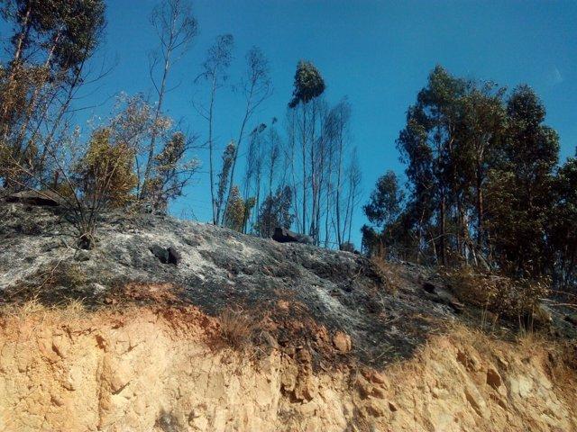 Zona afectada por el fuego en la provincia de Huelva.