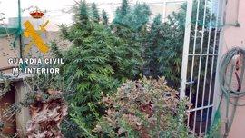 Intervenida una plantación de marihuana en Huércal de Almería en una actuación con dos detenidos