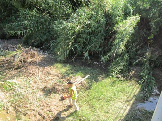 Trabajos de limpieza de la CHG en el río Jaén