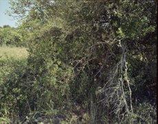 La Fundació Miró revisarà els significats de les illes mitjançant la mirada de sis artistes (FUNDACIÓ JOAN MIRÓ)