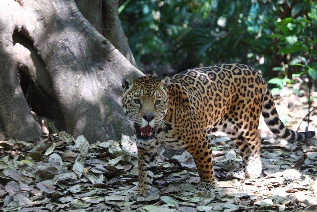 La UNAM, premio Fundación BBVA a la Conservación