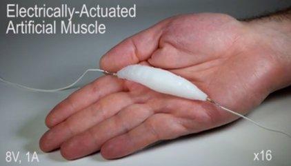 Llega el músculo naturalizado para robot, que emula al de los humanos