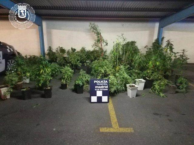 Plantas halladas