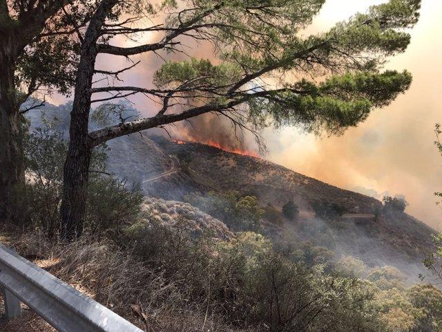 Incendio en Tejeda (Gran Canaria)