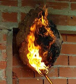 Nido de avispa asiática quemado