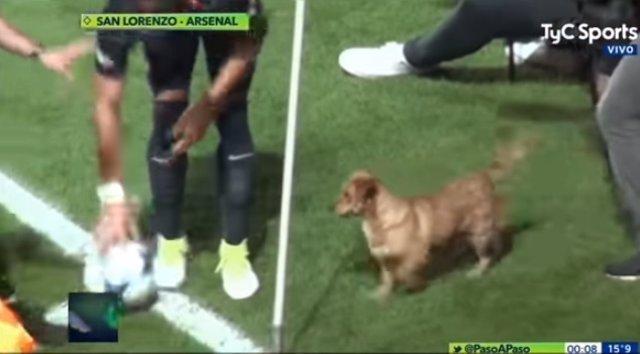 Este perro fue jugador de fútbol en otra vida y quiso demostrarlo en esta