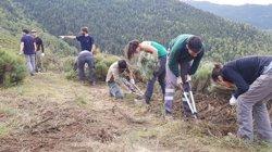 Més de 100 voluntaris del projecte Boscos de Muntanya milloren  pastures a Llosau –Ginestarre, al Pallars Sobirà (ACN)