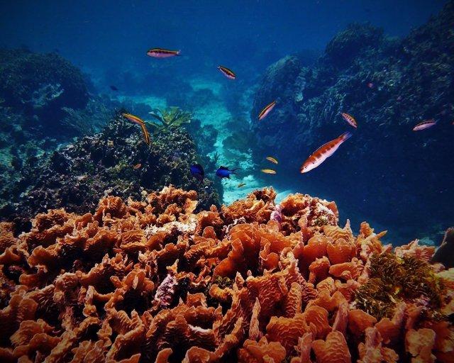 Arrecife de coral en Roatán (Honduras)
