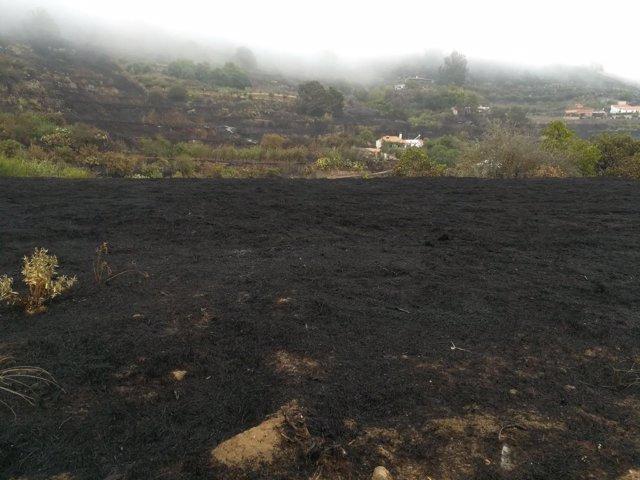 Terreno quemado durante el incendio de Gran Canaria