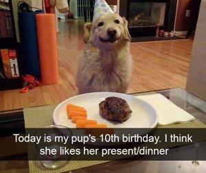 10 Fotos De Perros Que Viven Mejor Que Nadie