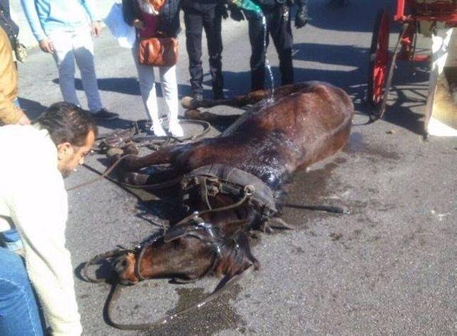 Caballo de una calesa de Palma desfallecido por el calor