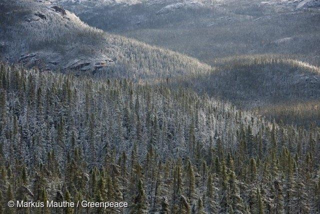 Gran Bosque boreal, la taiga rusa que almacena grandes cantidades de CO2