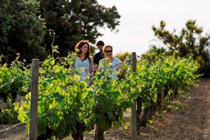 La exportación de vinos se eleva un 8,5% a julio, hasta los 254 millones
