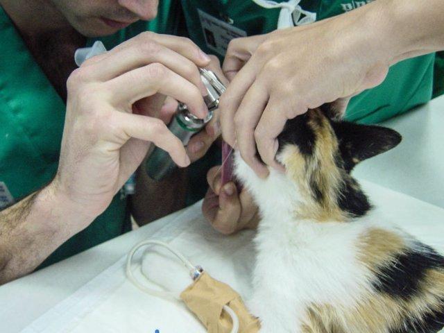Investigadores diseñan un simulador de las vías respiratorias de los gatos