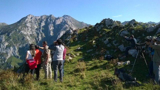 Visitas guiadas a Picos de Europa para conocer programa Quebrantahuesos