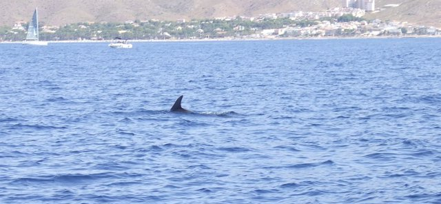 Imagen de un cetáceo