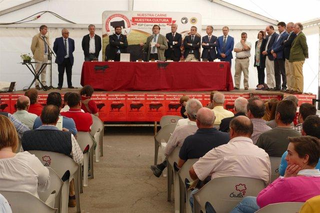 Clausura de la XLI Feria de Raza Avileña.