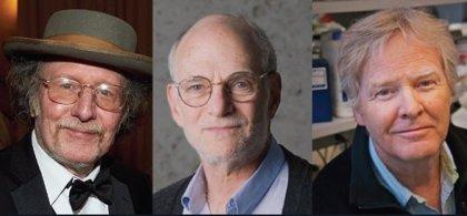 Jeffrey Hall, Michael Rosbash y Michael Young, galardonados con el Premio Nobel de Medicina 2017
