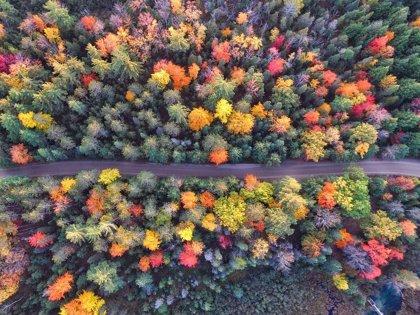 Por qué el otoño se convertirá en tu estación favorita del año