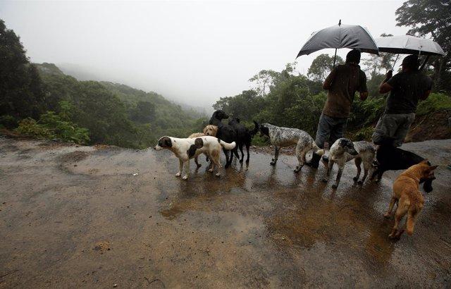Daños causados por la tormenta tropical 'Nate' en Costa Rica
