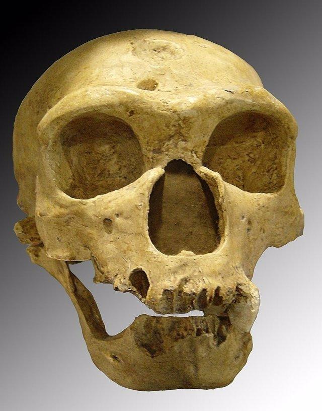 Neandertal de la Chapelle-aux-Saints