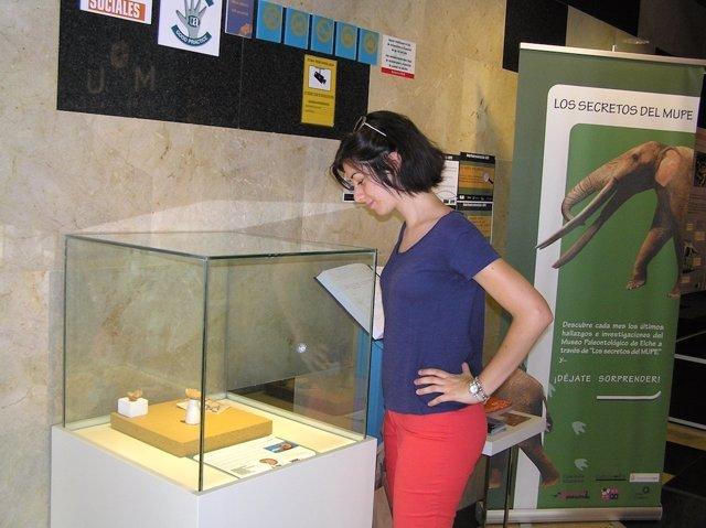 La estudiante que localizó los fósiles ante la vitrina que los expone