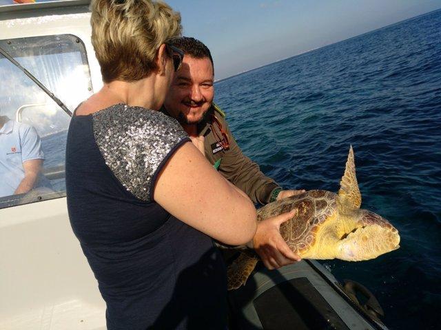 Imagen de al liberación de la tortuga boba