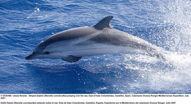 Delfín En El Área De Columbretes