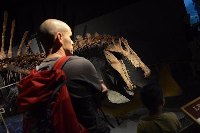 Muestra del Spinosaurus