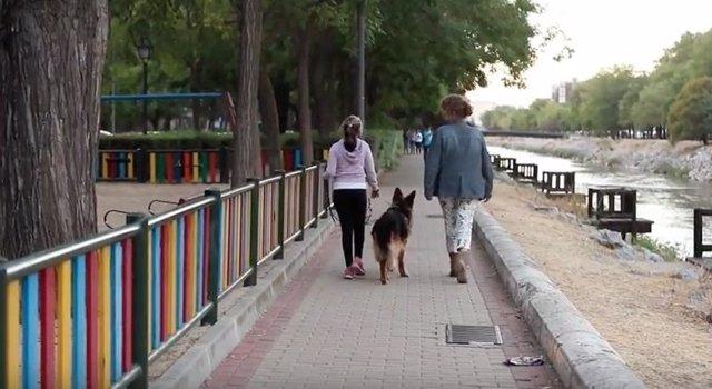 Dos mujeres caminan con un pastor alemán