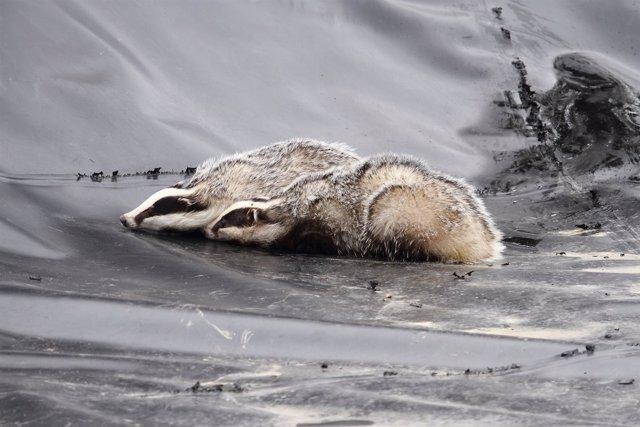 Animal muerto en una balsa