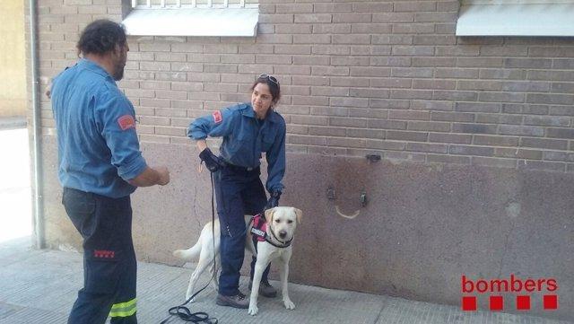 Seminario de 'mantrailing' en Lleida